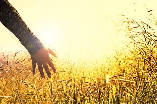 pourquoi mission humanitaire : main dans les blés